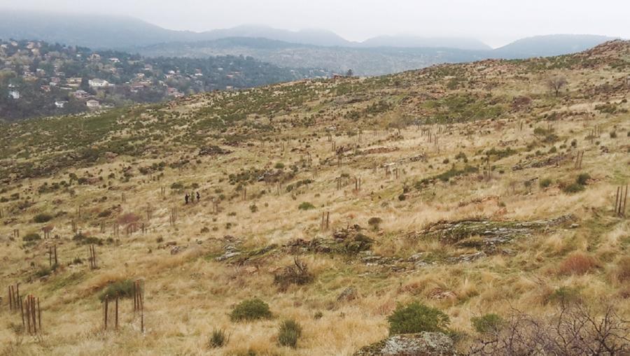 reforestacion-endesa