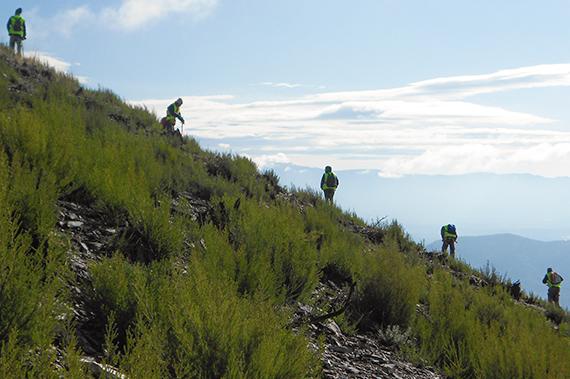 que-hacemos-siembras-forestales