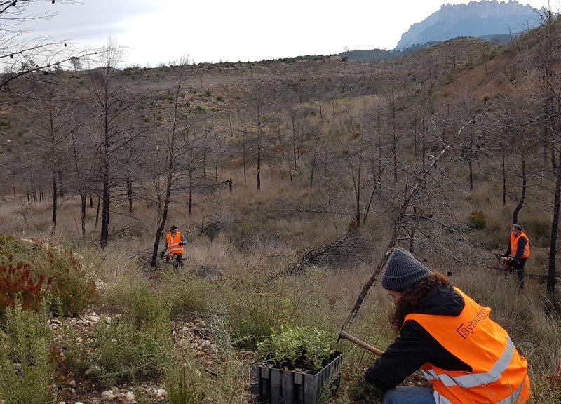 Montserrat-reforestacion